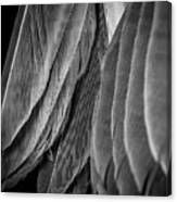 Tail Feathers Abstract Canvas Print