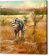 Tail Of Three Zebras Canvas Print