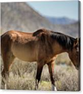 Take  A Walk On The Wildside  Canvas Print
