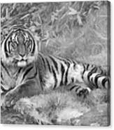 Takin It Easy Tiger Black And White Canvas Print