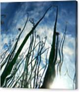Talking Reeds Canvas Print