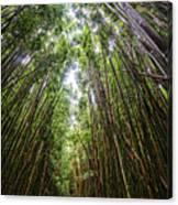 Tall Bamboo Canvas Print
