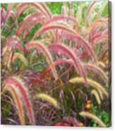 Tall, Colorful, Whispy Grasses In The Sumer Breeze Canvas Print