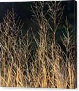Tall Fall Grasses Canvas Print