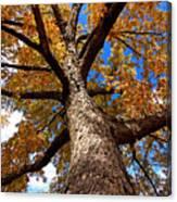 Tall Fall Tree Canvas Print