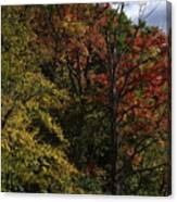 Tall Fall Trees Canvas Print