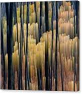 Tall Forest 2 Canvas Print