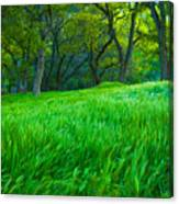 Tall Grass At Twilight Canvas Print