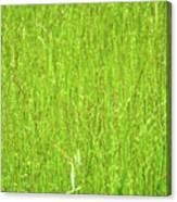 Tall Grassy Meadow Canvas Print