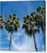Tall Palms Couples Canvas Print
