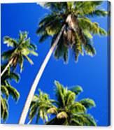 Tall Palms Canvas Print