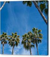 Tall Palms Meet The Sky Canvas Print