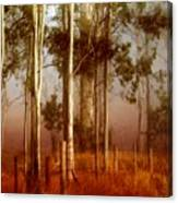 Tall Timbers Canvas Print