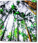 Tall Trees To The Sky Canvas Print