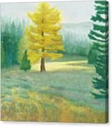 Tamarack Canvas Print