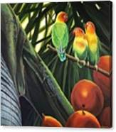 Tamboo Canvas Print