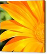 Tangerine Side Bloom Canvas Print