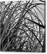 Tangled Grass Canvas Print
