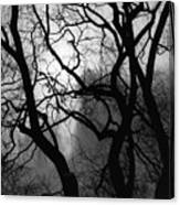Tangled Trees Canvas Print