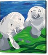 Tanio Curiosity  Canvas Print