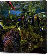 Tanked 1 Canvas Print