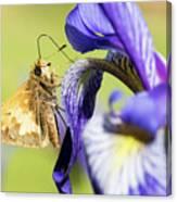 Tan_moth Canvas Print