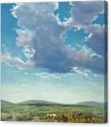 Taos Mustangs Canvas Print