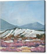 Taos Red Willows Canvas Print