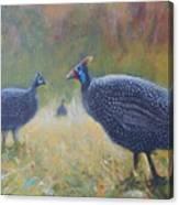 Tarantale - Guinea Fowl Canvas Print