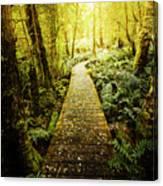 Tarkine Tasmania Trails Canvas Print