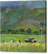 Taro Pickers Canvas Print