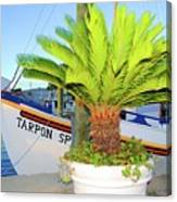 Tarpon                 Tarpon Palm                                     Canvas Print