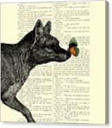 Tasmanian Tiger And Orange Butterfly Antique Illustration On Dictionary Page Canvas Print