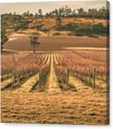 Tasmanian Winery In Winter Canvas Print