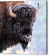 Tatanka Portrait Canvas Print