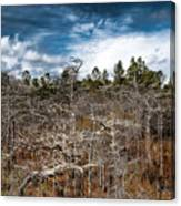 Tate's Hell State Forest Canvas Print