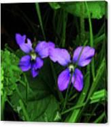 Tattered Wild Violets Canvas Print