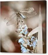 Tattered Wings B1 Canvas Print