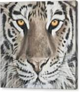 Taupe Tiger Canvas Print