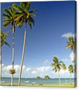 Taveuni Shoreline Canvas Print