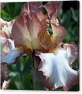 Tawny Iris Photograph Canvas Print