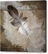 Tea Feather Canvas Print