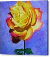 Tea Rose Canvas Print