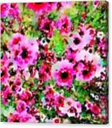 Tea Tree Garden Flowers Canvas Print