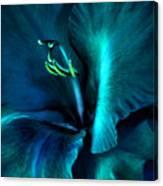 Teal Gladiola Flower Canvas Print