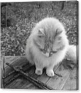 Ted In Black And White Canvas Print