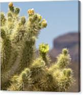 Teddy Bear Cholla Cactus With Flower Canvas Print