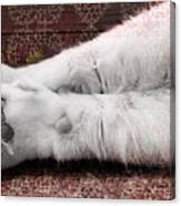 Teddy's Paw Canvas Print
