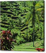 Tegalalang, Bali Canvas Print