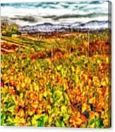 Temecula Vineyard Canvas Print